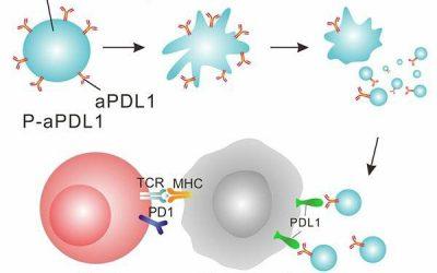 Las plaquetas pueden entregar inmunoterapia y reducir el crecimiento tumoral